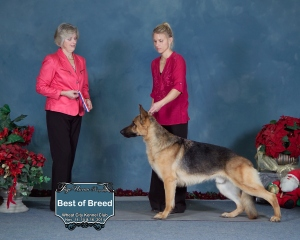Arie best of breed