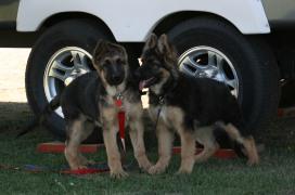 Arie and Diesel