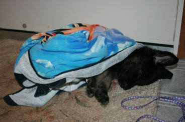 Brady Sleeping After A Bath