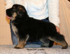 5 weeks - mauve girl stack