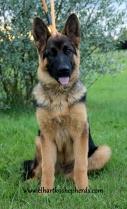 Archer 4.5 months sit