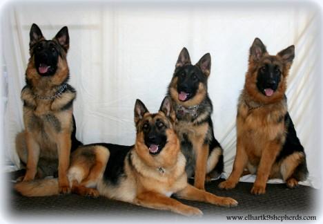 Louie, Cassie (mom) Beckett, and Max