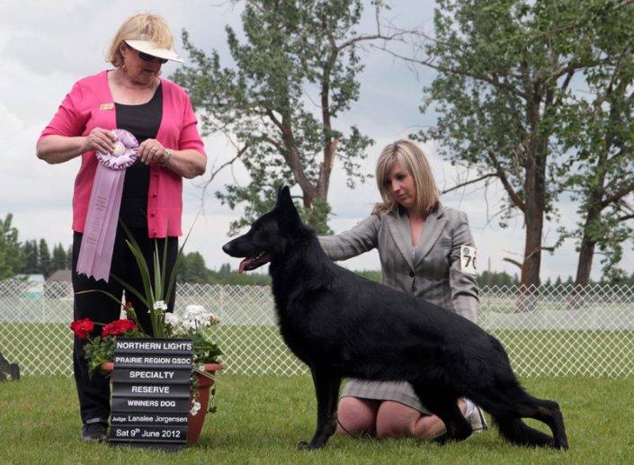 Codie Reserve Winners Dog