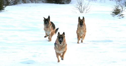 Daks, Arie, and Cassie