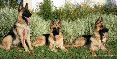 Daks, Lux, Arie