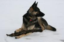 Brady winter with stick