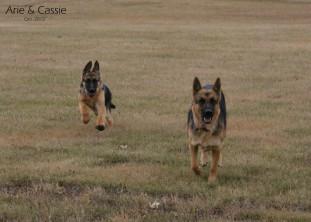 Arie & Cassie Running