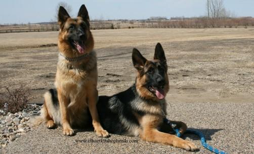 Bauer & Cassie