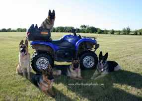 dogs with quad