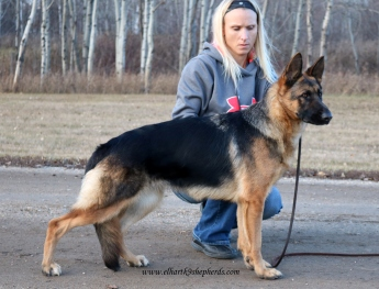FigoxCassie pup