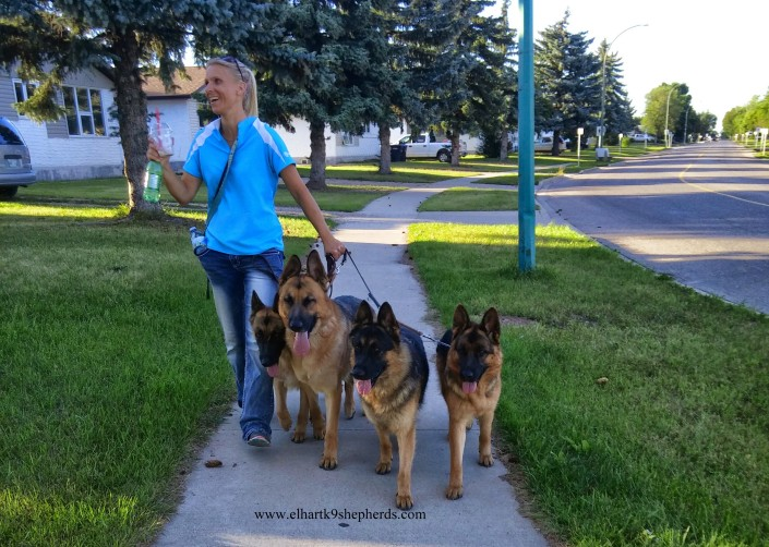 jemine walking dogs 2015