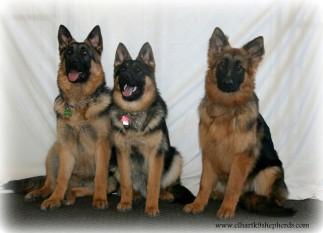 Louie, Beckett, & Max