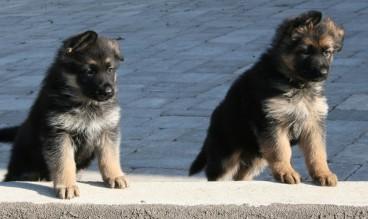 Baron and Max
