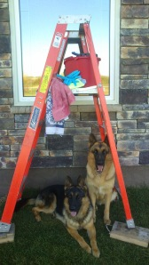 Beckett and Cassie under the ladder